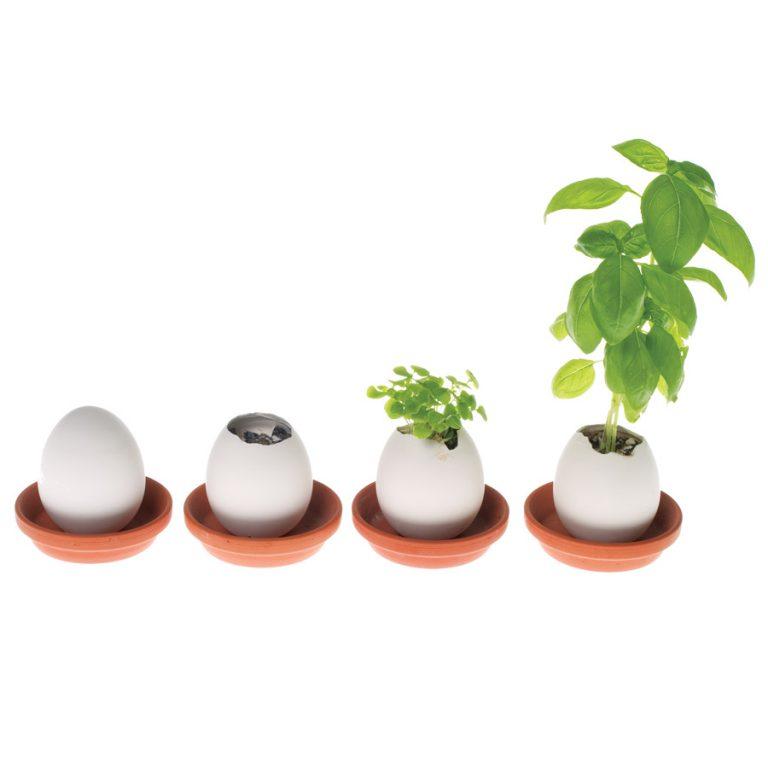 Eggling Crack & Grow Basil
