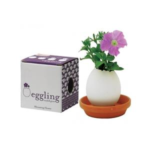 Eggling Crack & Grow Petunia
