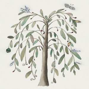 Anna Pignataro Tree Blank Card